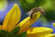 Apiterapie - léčba pomocí včelích produktů